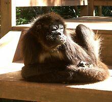 cappucino monkey by sarahroberts90