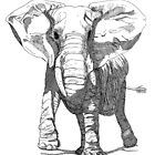 Elephant Pen and Ink Drawing by John Hopkins