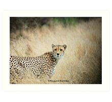 THE CHEETAH - Acin0nyx jabatus, the fastest preditor on earth Art Print