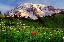 Rainier Wildflowers by Inge Johnsson
