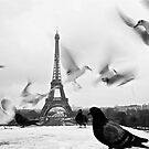Les Oiseaux by Danica Radman