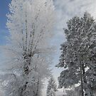 Frosty Cottonwood on Veterinary Clinic Drive by Janet Houlihan