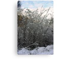 Winter Tree - Glenabo Woods, Cork, Ireland Canvas Print