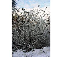 Winter Tree - Glenabo Woods, Cork, Ireland Photographic Print