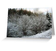 Winter Trees - Glenabo Woods, Cork, Ireland Greeting Card