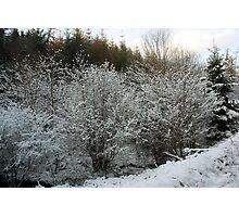 Winter Trees - Glenabo Woods, Cork, Ireland Photographic Print