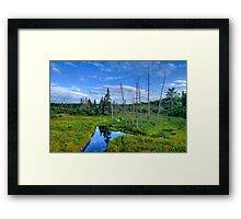 Just Nature - Maine Framed Print