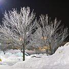 Lite Reflected Trees by Linda Miller Gesualdo