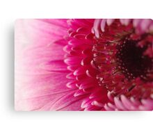 Pink petals fade to white Canvas Print