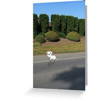 8 Bit Goat, In a High-Def World Greeting Card