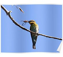 Bee-Eaters All Day Breakfast Poster