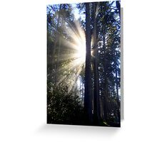 Backlighted Trees Greeting Card
