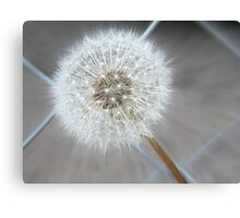 Through The Fence - Dandelion  Canvas Print