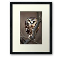Like I Give A Hoot... Framed Print