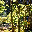 """Glowing Mossy Branches"" by Lynn Bawden"