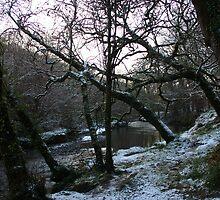 Frosty Forest - Newmarket, Cork, Ireland by CFoley