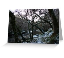 Frosty Forest - Newmarket, Cork, Ireland Greeting Card