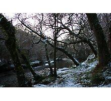 Frosty Forest - Newmarket, Cork, Ireland Photographic Print