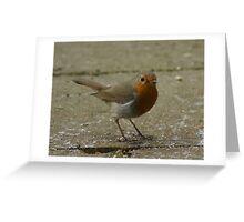 Robin wants his breakfast Greeting Card