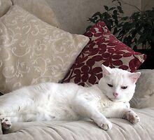 Casper reclining  by Caroline Anderson
