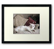 Casper reclining  Framed Print