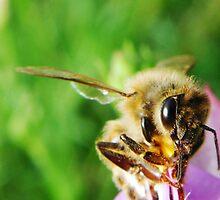 Bees Knees by PhoenixArt