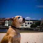 Enjoying the wind in her ears by Ben Breen