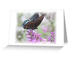 ♥♥Glorious Red Spotted Purple♥♥ Greeting Card
