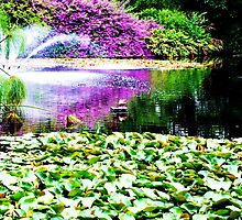 View of the pond ~ Botanic Gardens by startori