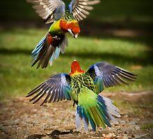 Colourful Argument - Sandy Bay, Tasmania by Liam Byrne