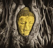 Buddha in Roots by Nicholas Richardson