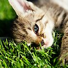 Cat Lying On The Lawn by Tom Prokop