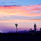 Coronado Color by Michael Chong
