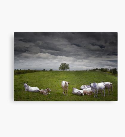 9 cows to Tree Canvas Print