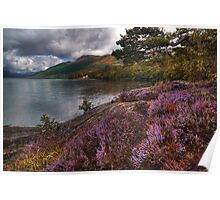 Lomond Heather Poster