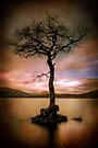 Milarrochy Tree (2) by Karl Williams