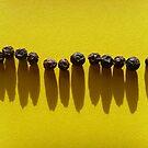 Peppercorns by Carol Dumousseau