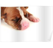 Little Puppy Poster