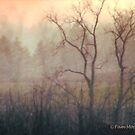 A Foggy Morning... by Pam Moore