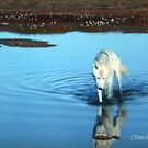 The White Wolf... by Pam Moore