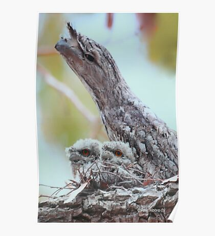 Momma Bird with Babies Poster