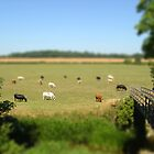 Grazing cows - Buckinghamshire by Chloe Woods