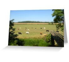 Grazing cows - Buckinghamshire Greeting Card