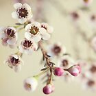 tiny : simple : blooms (on white) by kellymacphoto
