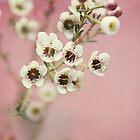 tiny : simple : blooms (on pink) by kellymacphoto