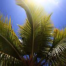 Caribbean Palm with Sunshine by Tom Prokop