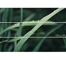 Grass lite Photographic Print
