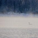Swan in fog by Bluesrose