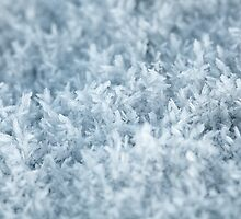 Hoar Frost by Andy Freer