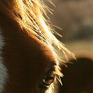 Golden Light of a Horse's eye by CheyAnne Sexton